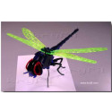 Puzzle 3D Dragonfly corte laser